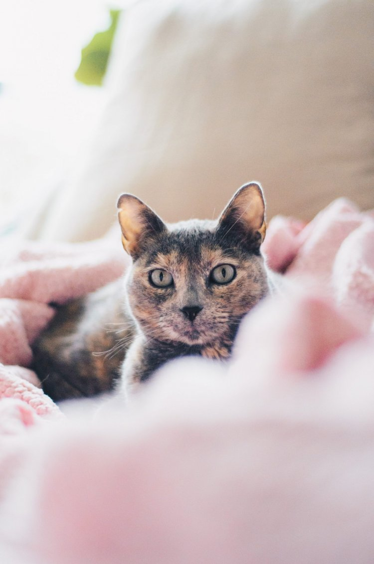 6 Tips For Caring For Your Indoor Cat